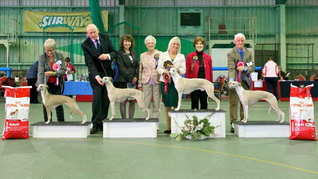 Champiomship Show Dog Results